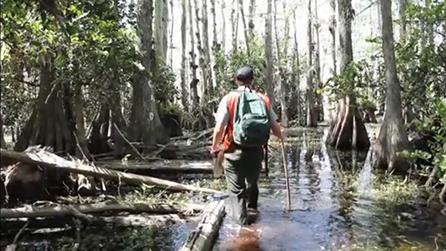 swamp_sm